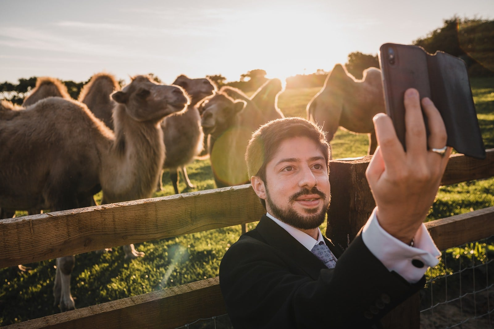 cornish camels rosuick farm wedding